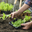 Save on packaging – grow your own!